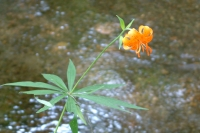 masyuen_river_0055