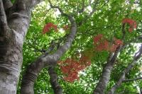 masyuen_autumn_1_0059