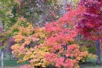 masyuen_autumn_2_0015
