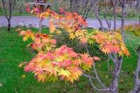 masyuen_autumn_2_0064