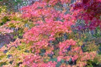 masyuen_autumn_3_0034