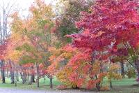 masyuen_autumn_3_0040