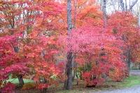 masyuen_autumn_3_0041