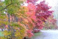 masyuen_autumn_3_0104