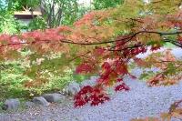 masyuen_autumn_3_0114