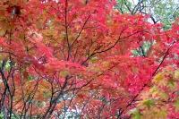masyuen_autumn_3_0116