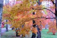 masyuen_autumn_3_0118