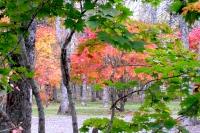 masyuen_autumn_3_0124