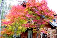 masyuen_autumn_3_0130