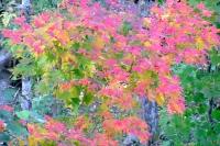 masyuen_autumn_3_0131