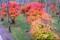 masyuen_autumn_3_0137