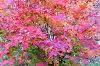 masyuen_autumn_3_0160