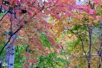 masyuen_autumn_3_0163