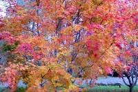masyuen_autumn_3_0164