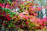 masyuen_autumn_3_0168