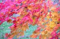 masyuen_autumn_3_0177