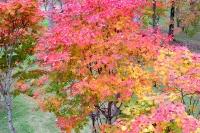 masyuen_autumn_3_0208