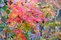 masyuen_autumn_3_0218