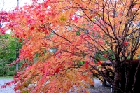 masyuen_autumn_3_0228