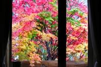 masyuen_autumn_3_0230