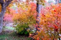 masyuen_autumn_3_0234