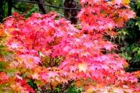 masyuen_autumn_3_0236