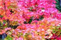 masyuen_autumn_3_0257