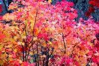 masyuen_autumn_3_0273
