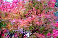masyuen_autumn_3_0276