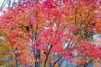 masyuen_autumn_3_0280