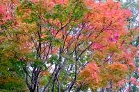 masyuen_autumn_3_0288