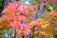 masyuen_autumn_3_0290