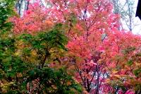 masyuen_autumn_3_0293