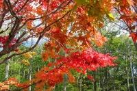 masyuen_autumn_3_0323