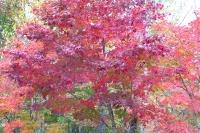 masyuen_autumn_4_0024