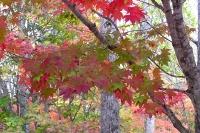 masyuen_autumn_4_0025