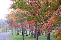 masyuen_autumn_5_0022