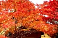 masyuen_autumn_5_0073