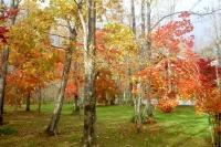 masyuen_autumn_5_0113
