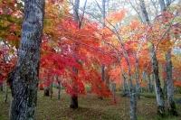 masyuen_autumn_5_0120