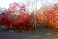 masyuen_autumn_5_0125